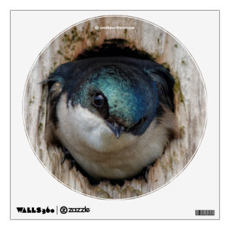Tree Swallow in a Nestbox Wall Sticker