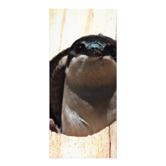 Tree Swallow in box Rack Card
