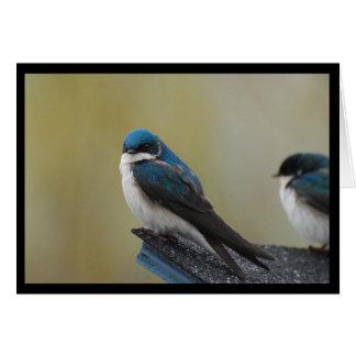 Tree Swallow Note Card (blank)