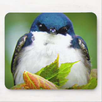 Tree Swallow Photo Mouse Pad