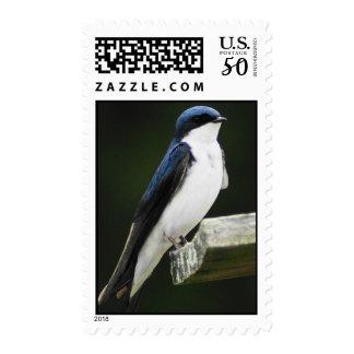 Tree Swallow Postage