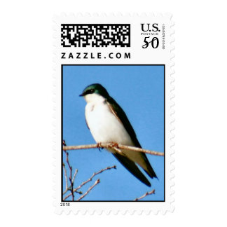 Tree Swallow Postage Stamp