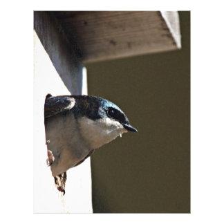 Tree Swallow Profile in Nest Box Custom Flyer