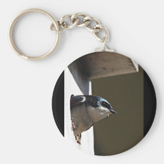 Tree Swallow Profile in Nest Box Key Chains