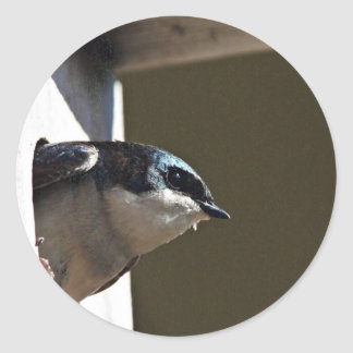 Tree Swallow Profile in Nest Box Round Sticker