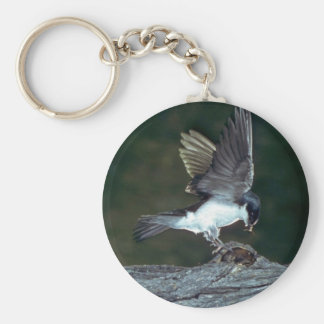 Tree Swallow with bug Key Chains