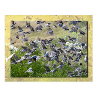 Tree Swallows, Assateague Island Postcard