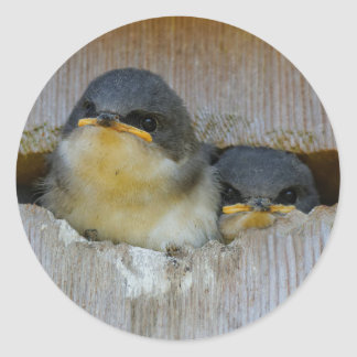 Tree Swallows Looking Out at the Big Wide World Classic Round Sticker