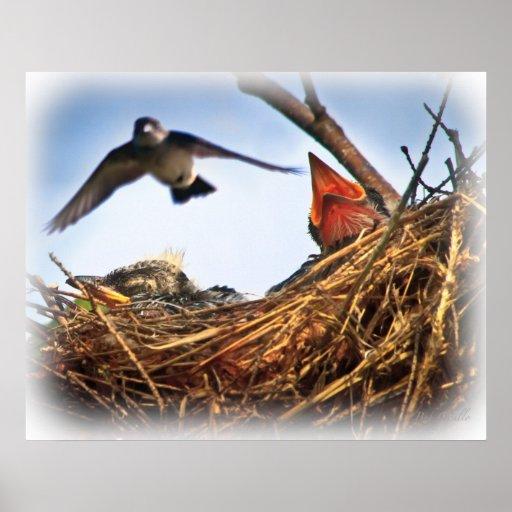 Tree Swallow's Nest Feeding Time Poster