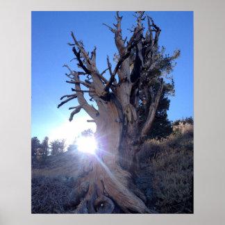 Tree to telescope peak posters