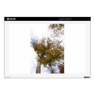 TREE TOP IN AUTUMN LAPTOP DECAL