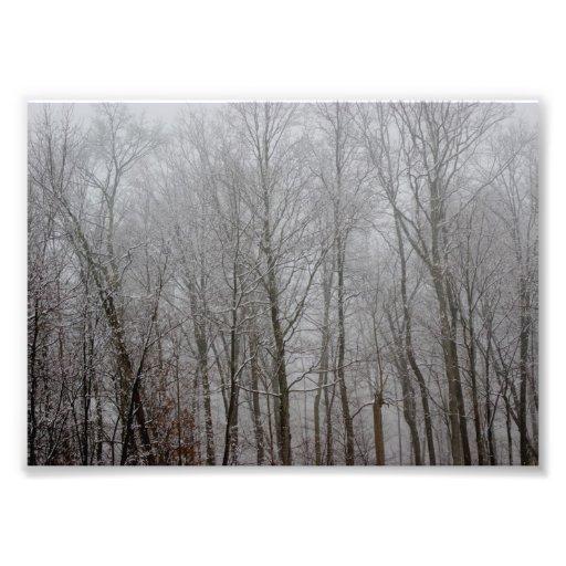Tree Top Mist 7x5 Photographic Print