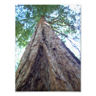 Tree Triangles Photo Print