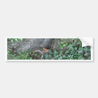 Tree trunk and ivy in forest bumper sticker