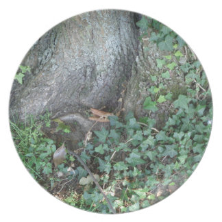 Tree trunk and ivy in forest dinner plates