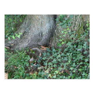 Tree trunk and ivy in forest postcard