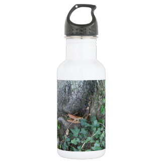 Tree trunk and ivy in forest stainless steel water bottle