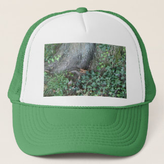 Tree trunk and ivy in forest trucker hat