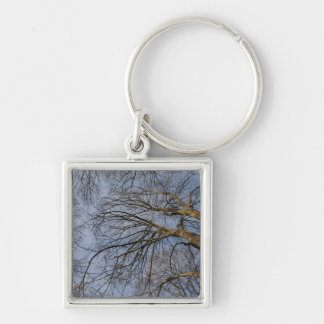 Tree trunk design/pattern. Pioineer Park, WA Keychain