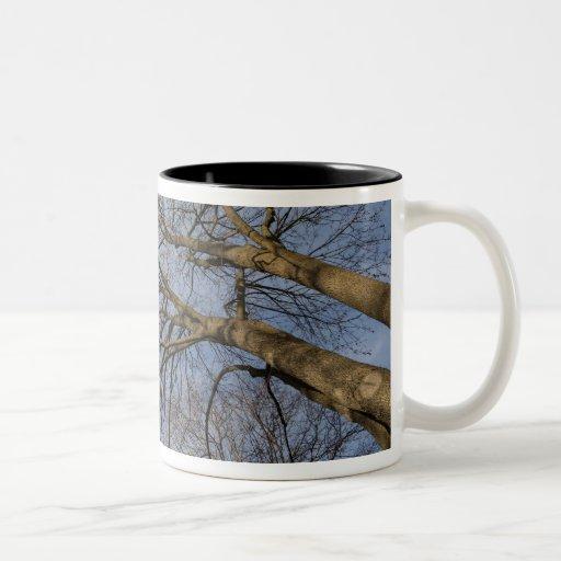 Tree trunk design/pattern. Pioineer Park, WA Coffee Mugs