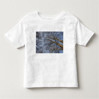 Tree trunk design/pattern. Pioineer Park, WA Toddler T-shirt