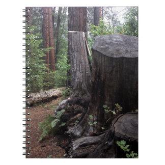 Tree Trunk Notebooks