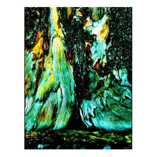 """Tree Trunk One"" JTG Art Postcard"