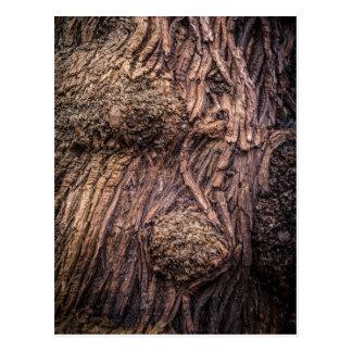 Tree trunk postcard