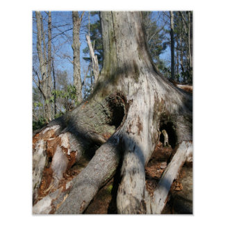 Tree Trunk Poster