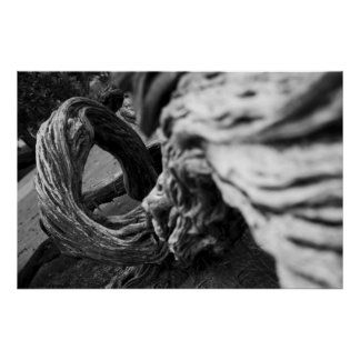 Tree Trunk Spiral B&W Photograph - Poster