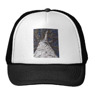 Tree trunk trucker hat