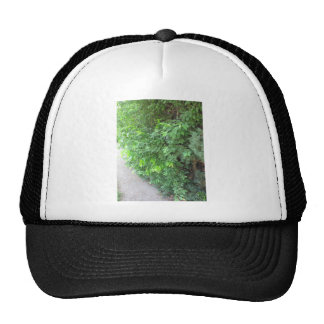 TREE Trunk Wild Save+Tree Green America NVN682 FUN Trucker Hat