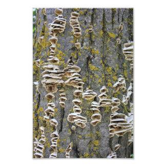 Tree Trunk with Lichen Photo Art