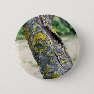 Tree trunk with yellow moss fungus button