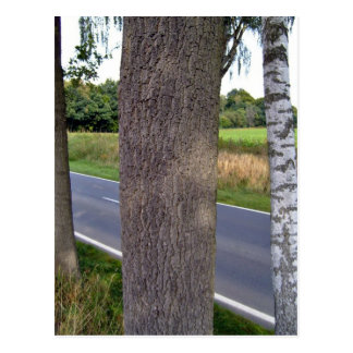 Tree Trunks along empty road Postcard