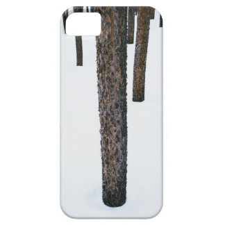 Tree Trunks in Snow iPhone SE/5/5s Case