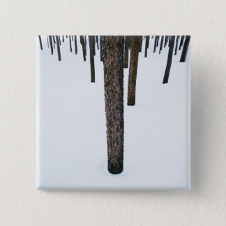 Tree Trunks in Snow Pinback Button