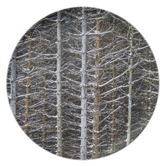 Tree trunks in winter plates