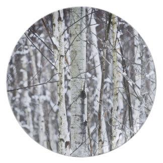 Tree trunks in winter plate
