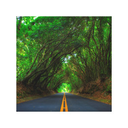 Tree Tunnel Canvas Print
