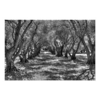 Tree Tunnel Photo Print