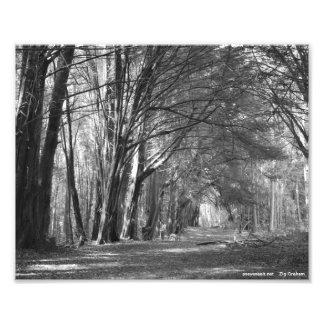 Tree Tunnel Photo Art
