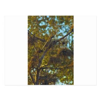 Tree Under Bridge Postcard