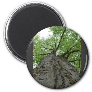Tree View Refrigerator Magnet