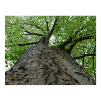 Tree View Postcard