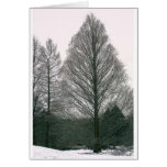 Tree - Wave Hill NYC Greeting Card