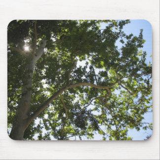 Tree with Blue sky - mousepad