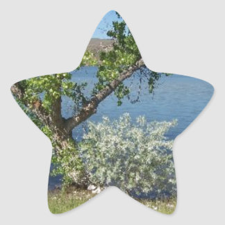 Tree with Bush on Lake Star Sticker