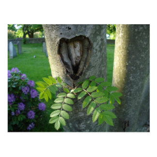 Tree with Heart Postcard