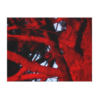TREE WITH RED LIGHT GLOWING HOBART TASMANIA CANVAS PRINT